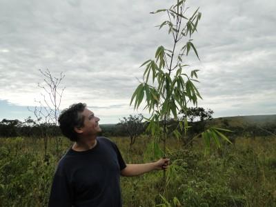 bambu abril 2012 (4)