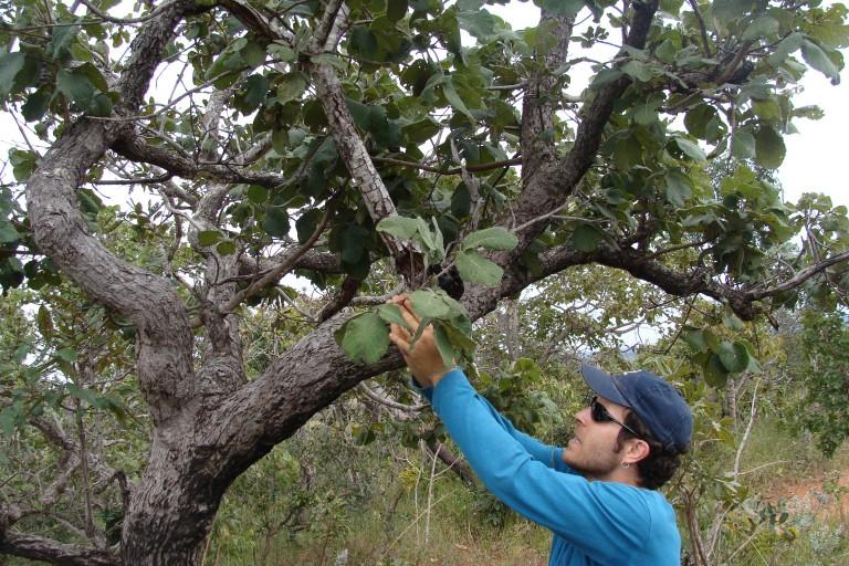levantamento ecológico rápido elisa ecodata  (56)