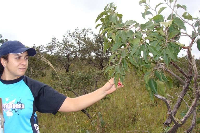 levantamento ecológico rápido elisa ecodata  (7)